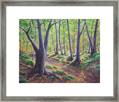 Vermont Woodland Spring Framed Print by Frank Wilson