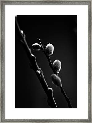 Vernal Awakening Framed Print