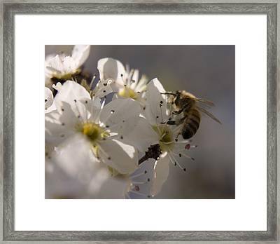 Vernal Equinox I Framed Print