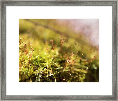 Vernal Impression Framed Print