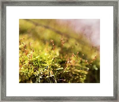 Vernal Impression Framed Print