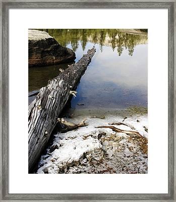 Vernal Pond I Framed Print by D Kadah Tanaka
