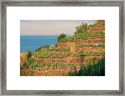 Vernazza Vineyards Framed Print by Joan Carroll