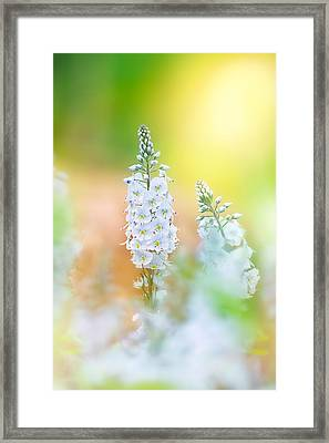 Veronica Glow Framed Print