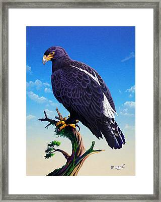 Verreaux's Eagle  Framed Print