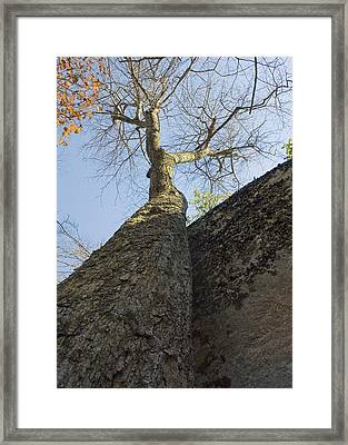 Framed Print featuring the photograph Vertical by Alan Raasch