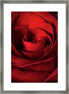 Vertical Rose Framed Print