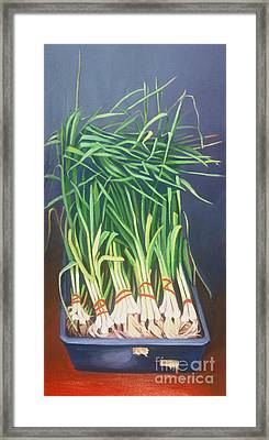 Vertical Scallions Framed Print by Natasha Harsh