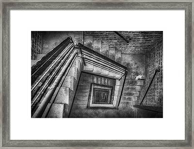 Vertigo - Cat - Stairwell Framed Print by Nikolyn McDonald