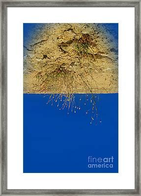 Vertigo II Framed Print by Jasna Buncic