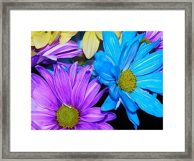 Very Colorful Flowers Framed Print by Christy Patino