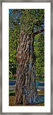 Very Old. But Very Sturdy Tree Trunk. Framed Print by Andy Za