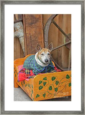 Framed Print featuring the photograph Very Old Pet Dog In Clothes On Own Bed by Patricia Hofmeester