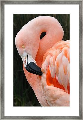 Very Pretty Bird Framed Print