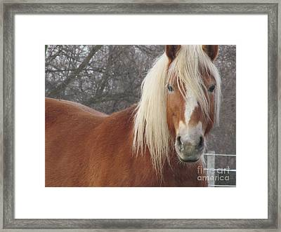Very Ready For Close Up Framed Print