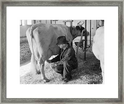 Veterinarian Examining Cow, C.1930-40s Framed Print