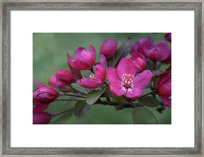 Framed Print featuring the photograph Vibrant Blooms by Ann Bridges