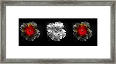Vibrant Flower Series 3 Framed Print by Jen White