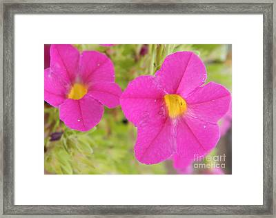 Vibrant Flowers Framed Print