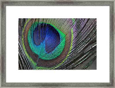 Vibrant Green Feather Framed Print