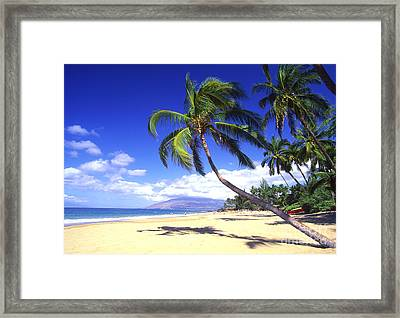 Vibrant Green Palms Framed Print by Ron Dahlquist - Printscapes