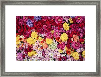 Vibrant Life Framed Print by David Millenheft