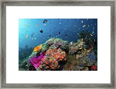 Vibrant Lives Framed Print by Lea Lee