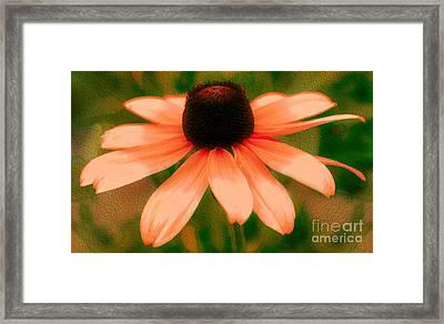 Vibrant Orange Coneflower Framed Print by Judy Palkimas