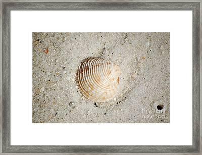 Vibrant Orange Ribbed Sea Shell In Fine Wet Sand Macro Framed Print