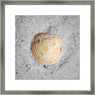 Vibrant Orange Ribbed Sea Shell In Fine Wet Sand Macro Square Format Color Splash Black And White Framed Print by Shawn O'Brien