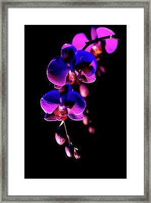 Framed Print featuring the photograph Vibrant Orchids by Ann Bridges