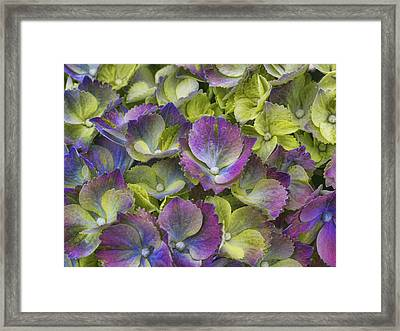 Vibrant Petals Framed Print by Eggers Photography
