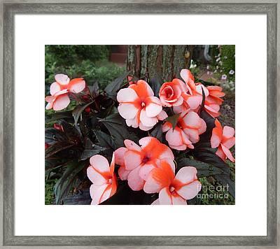 Plumerias Vibrant Pink Flowers Framed Print