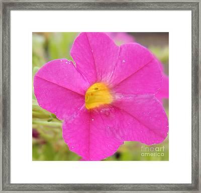 Vibrant Pink Flower Framed Print