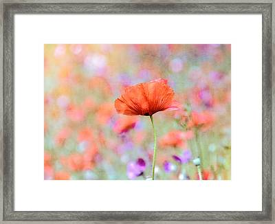 Framed Print featuring the photograph Vibrant Poppies In A Field by Marion McCristall