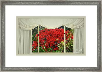 Vibrant Red Blossoms Window View By Kaye Menner Framed Print