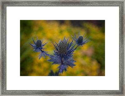 Vibrant Thistles Framed Print by Mike Reid