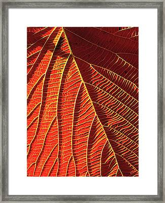 Vibrant Viburnum Framed Print by ABeautifulSky Photography