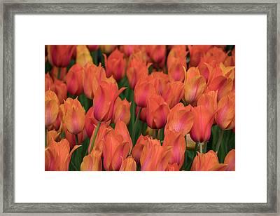 Vibrant Whispers Framed Print
