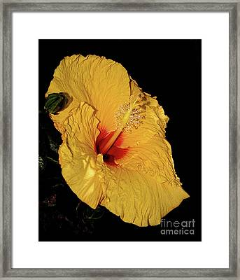 Vibrant Yellow Hibiscus By Kaye Menner Framed Print by Kaye Menner