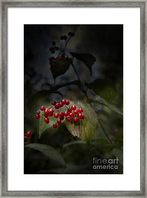 Viburnum Framed Print