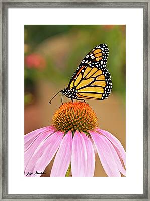 Monarch Butterfly On A Purple Coneflower Framed Print