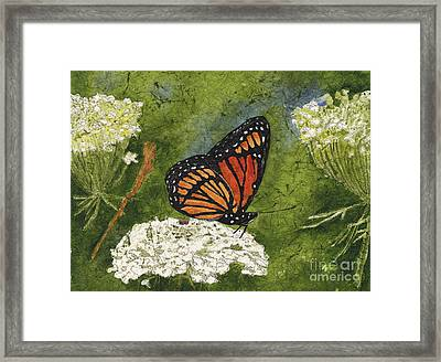 Viceroy Butterfly On Queen Anne's Lace Watercolor Batik Framed Print