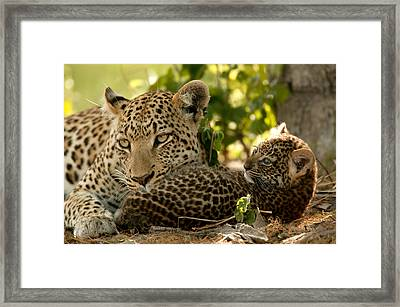 Victoria Falls And Zambezi River Shot Framed Print by Jason Edwards