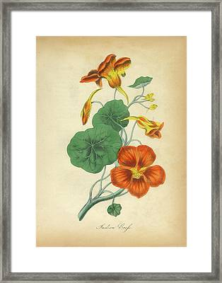 Victorian Botanical Illustration Of Indian Crefs Framed Print by Peacock Graphics