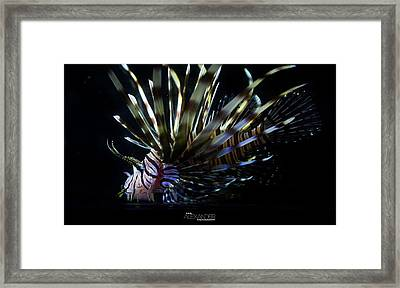 Vieques Lionfish Profile #1 Framed Print by Karl Alexander