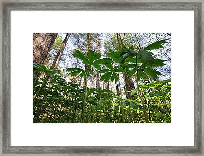 View From The Floor Framed Print by Mark Highfield