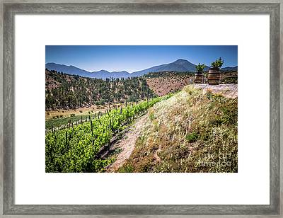 View Of The Vineyard. Winery In Casablanca, Chile. Framed Print