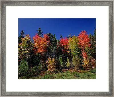 View In The Appalachian Mountains Framed Print