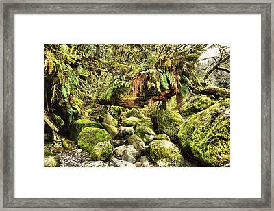 View Of A Rain Forest  Framed Print by Jeff Swan